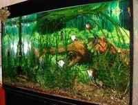 Kak sdelat akvarium svoimi rukami: poshagovaya instruktsiya