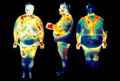 когда жир откладывается на животе
