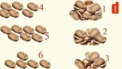 Гадание на бобах с толкованием значений: инструкция, как гадать на 41 бобах