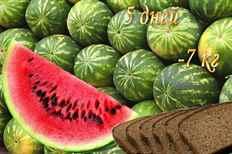 арбуз и диета на правильном питании