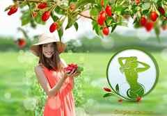 Как есть ягоды годжи, чтобы похудеть