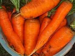 Какие витамины содержатся в морковке