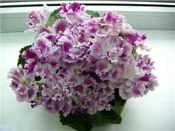 Гороскоп друидов - цветы: совместимость знаков, календарь по датам