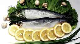 аллергия на морскую свинку симптомы фото
