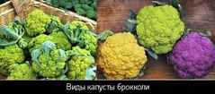 капуста брокколи пожелтела можно ли есть