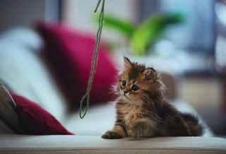 Чему к снится котят подбирать