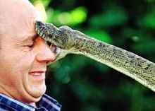 представляется дорогой видеть большую змею во сне к чему это толстый мясной