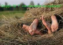 К чему снится сено или стог соломы, видеть, как оно горит