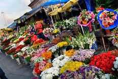 Во сне видеть много цветов живых