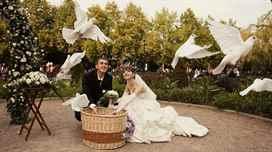 Как запустить голубей на свадьбу