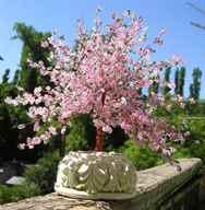 К чему снится дерево Сонник срубленное дерево во сне сулит крушение надежд