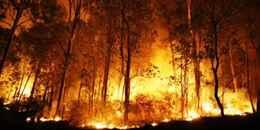 К чему снится горят деревья
