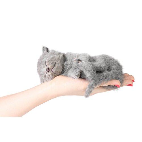 Серый котик умер во сне