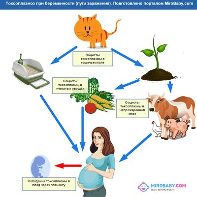 Bacteroides species у беременных 59