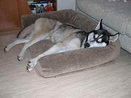 Подстилка для собак в будку